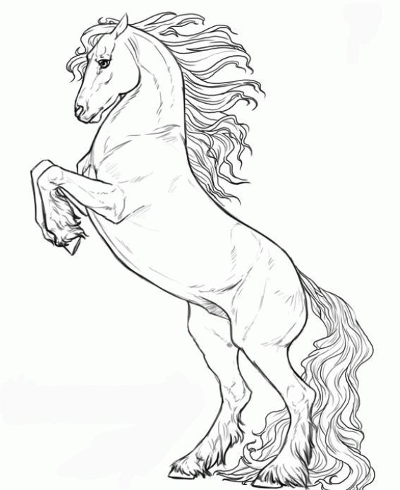 caballo dibujo