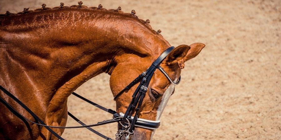 caballos de Nueva Zelanda