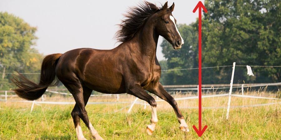 altura de un caballo
