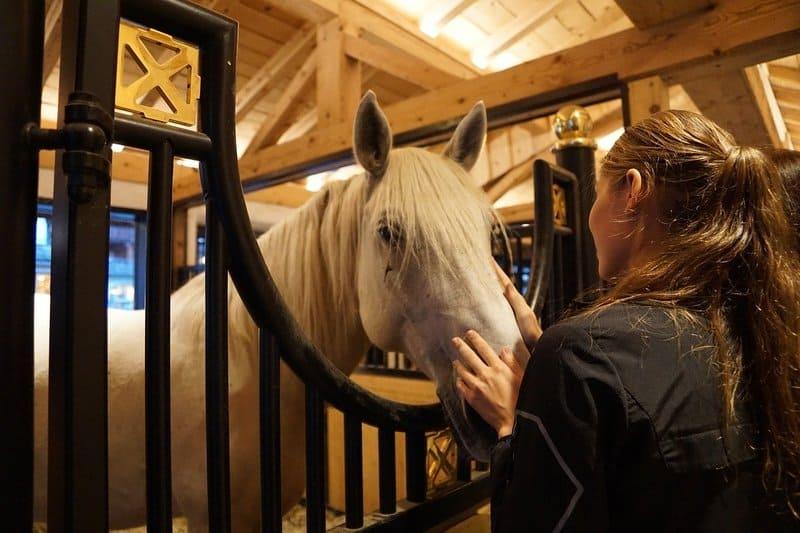 caballo lipizzano en su puesto