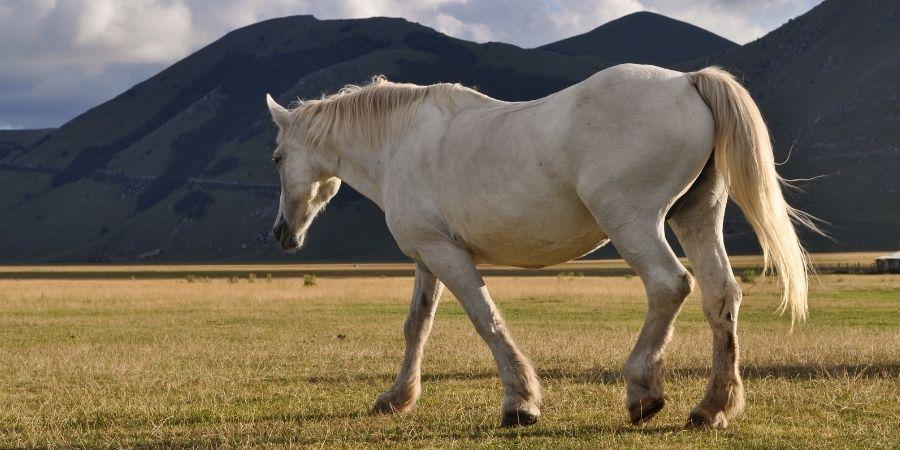 cuidados y alimentacion de los caballos garañones