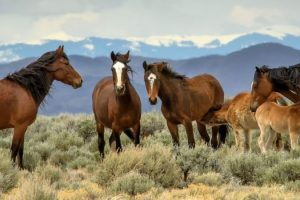 donde viven los caballos