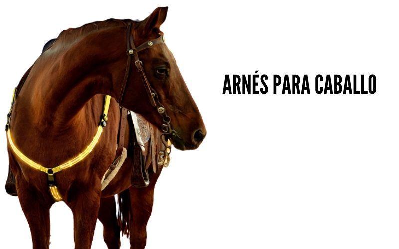 pecheras para caballo con luces