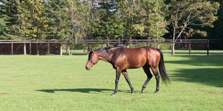 valor de los caballos garañones