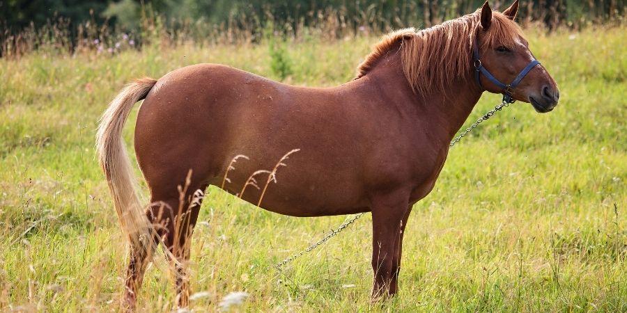 valor de un caballo zainos