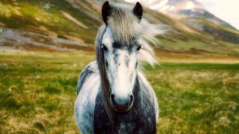 vida de un caballo